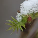 Schnee_Busch