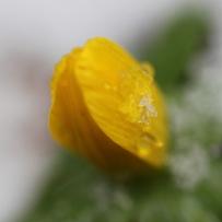 Schnee_Gelbe